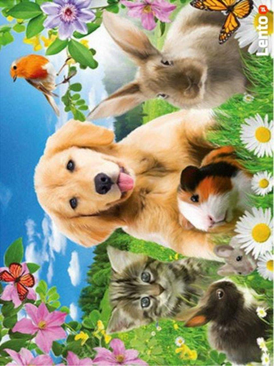 Opieka nad zwierzętami 24/7 strzyżenie psów