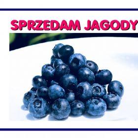 Jagody 10 zł / litr